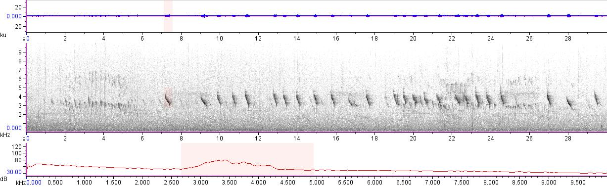 Sonogram of recording #AV 11855
