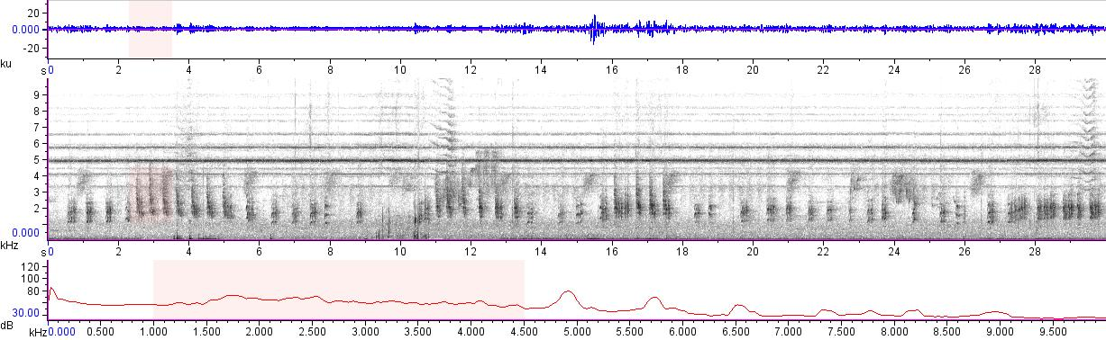 Sonogram of recording #AV 11864