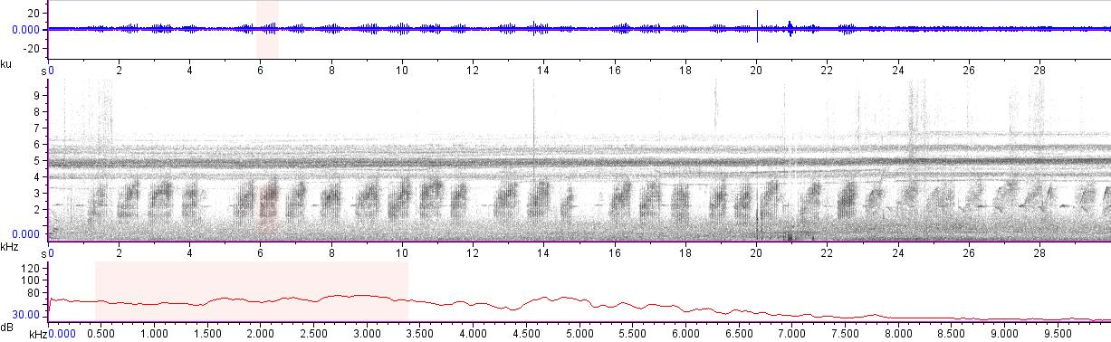 Sonogram of recording #AV 11866