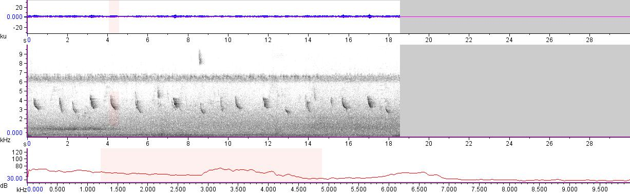 Sonogram of recording #AV 11877