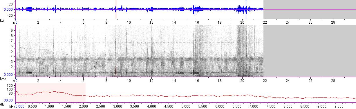 Sonogram of recording #AV 11887