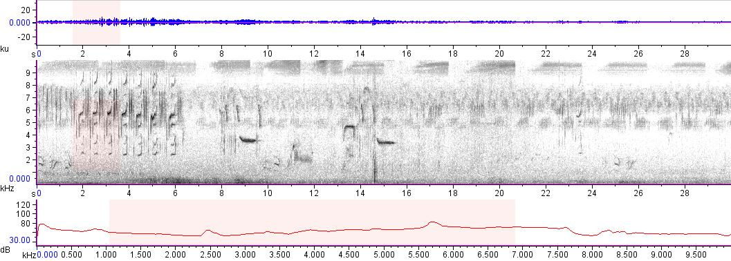 Sonogram of recording #AV 12018