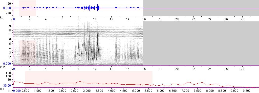 Sonogram of recording #AV 12075