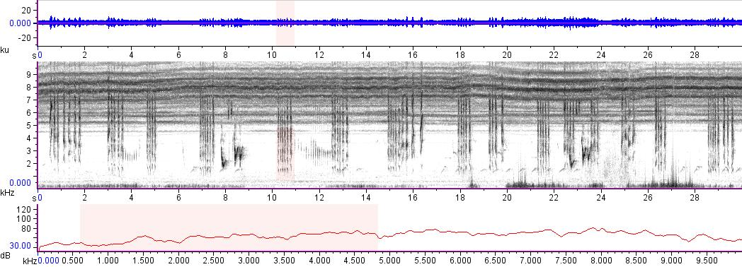 Sonogram of recording #AV 12080