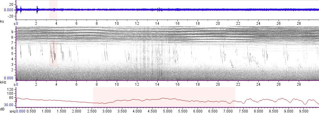 Sonogram of recording #AV 12250