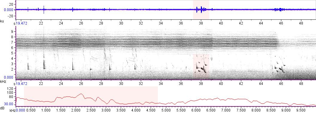 Sonogram of recording #AV 12265
