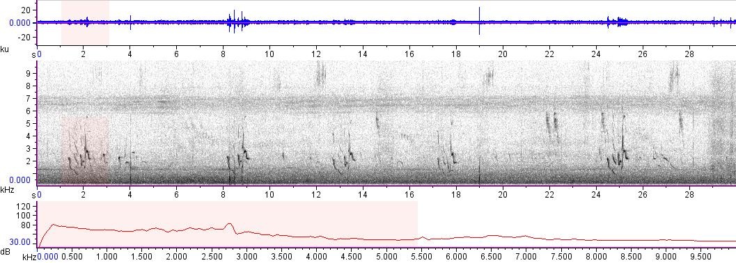 Sonogram of recording #AV 12272