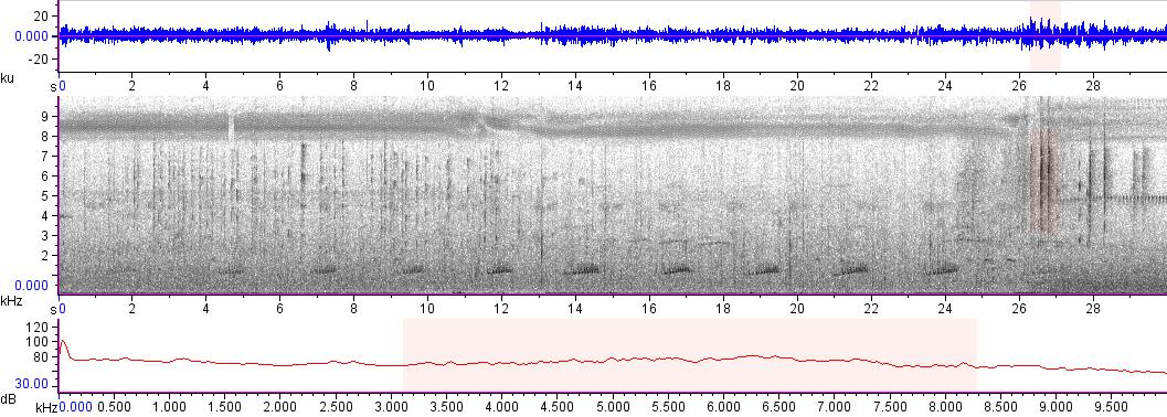Sonogram of recording #AV 12312