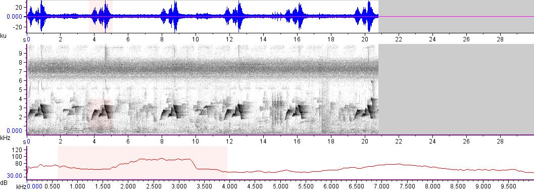Sonogram of recording #AV 12318