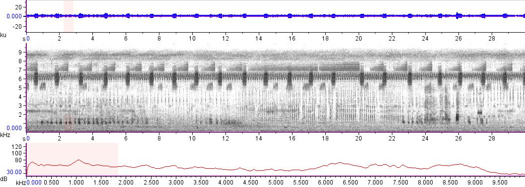 Sonogram of recording #AV 12338