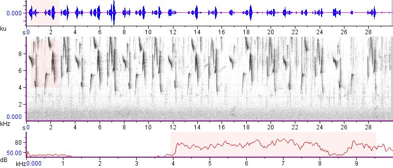 Sonogram of recording #AV 12426