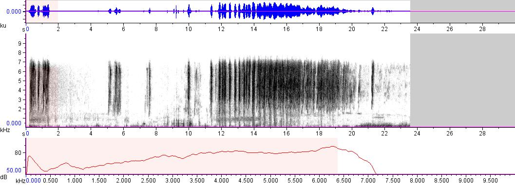 Sonogram of recording #AV 12438