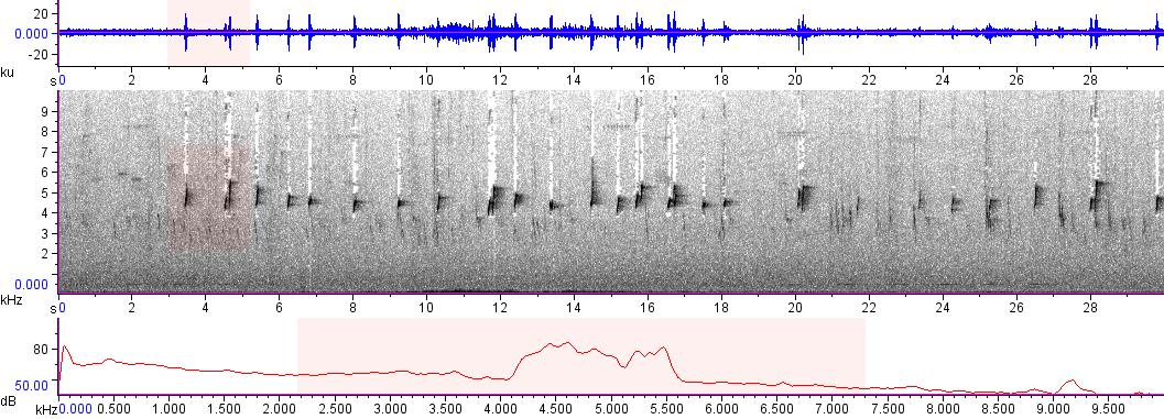 Sonogram of recording #AV 12439