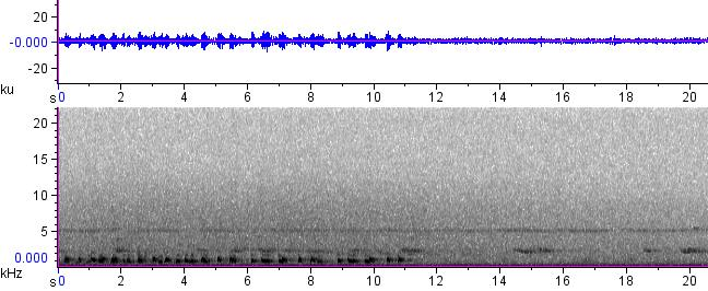 Sonogram of recording #AV 12451