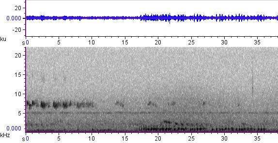 Sonogram of recording #AV 12454