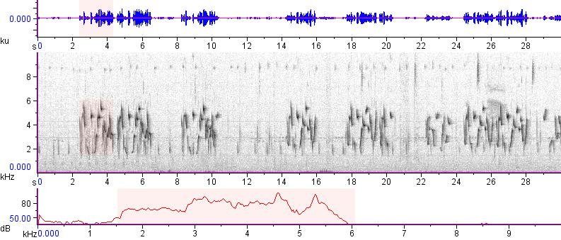 Sonogram of recording #AV 12496