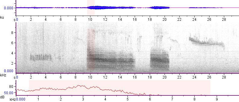 Sonogram of recording #AV 12504