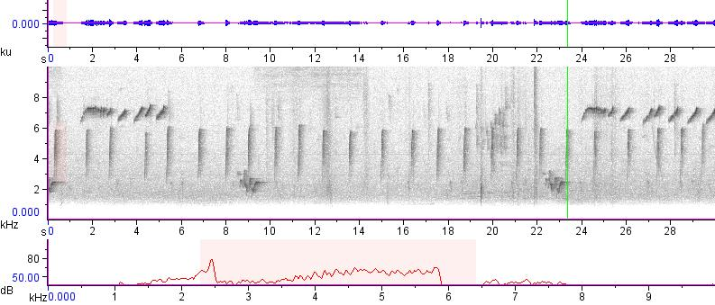 Sonogram of recording #AV 12563