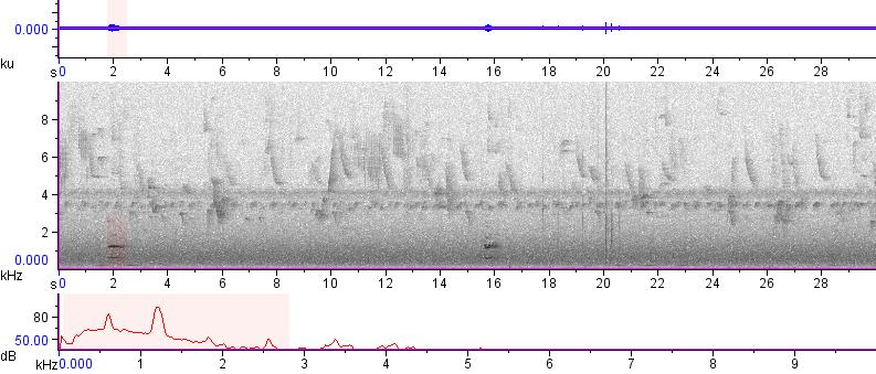 Sonogram of recording #AV 12571