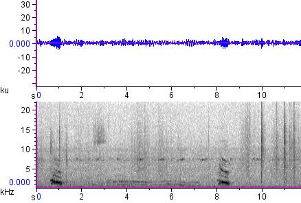 Sonogram of recording #AV 12606