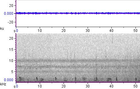 Sonogram of recording #AV 12608
