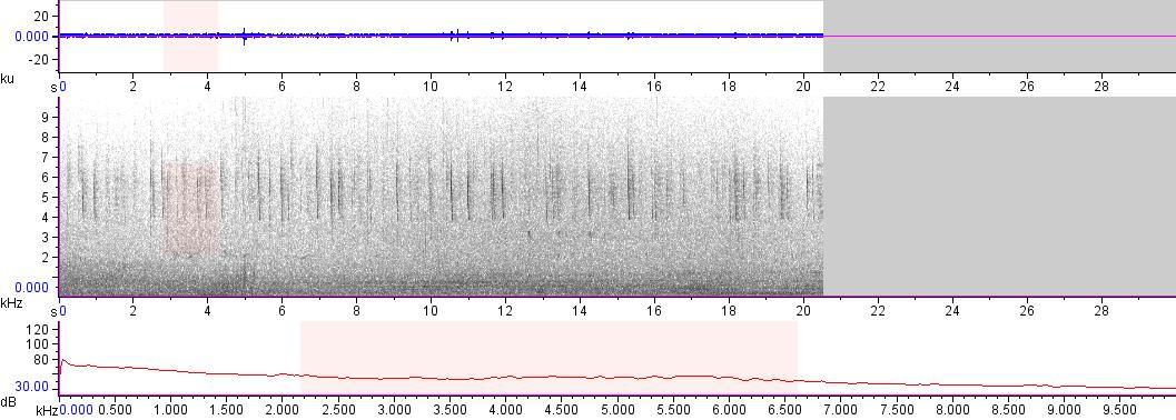 Sonogram of recording #AV 12624