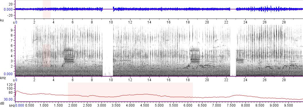 Sonogram of recording #AV 12667