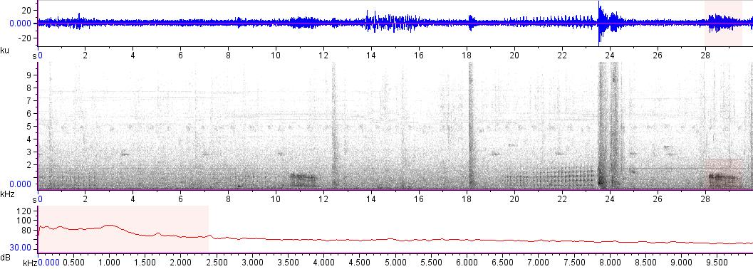 Sonogram of recording #AV 12671