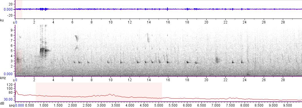 Sonogram of recording #AV 12675