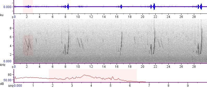 Sonogram of recording #AV 12743