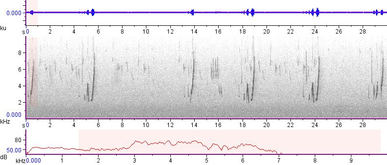 Sonogram of recording #AV 12744