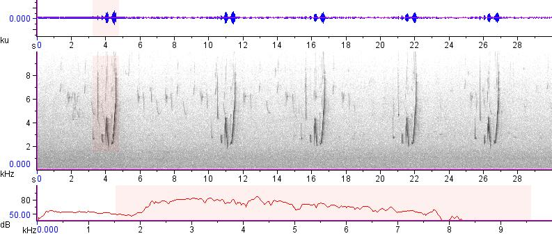 Sonogram of recording #AV 12745