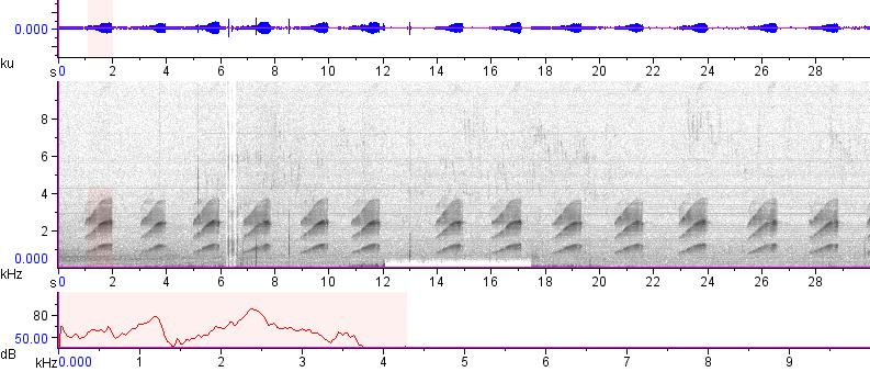 Sonogram of recording #AV 12750
