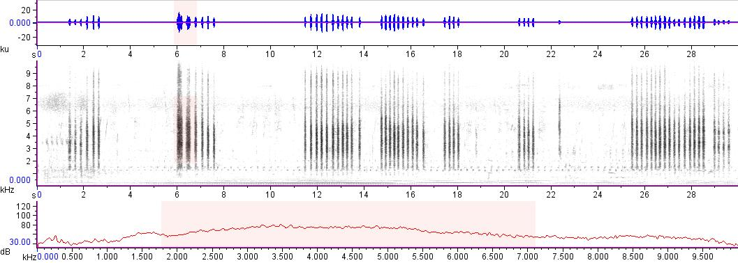 Sonogram of recording #AV 12755