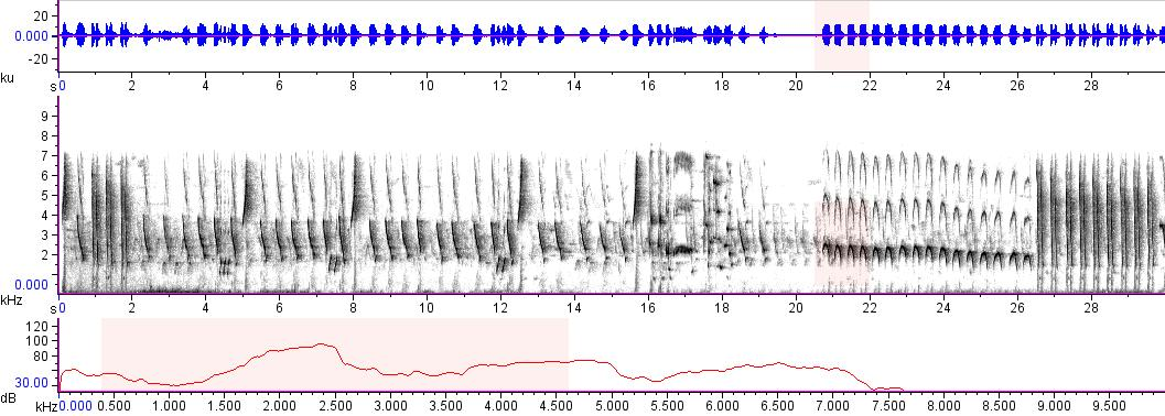 Sonogram of recording #AV 12789