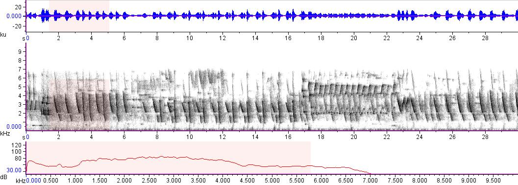 Sonogram of recording #AV 12791