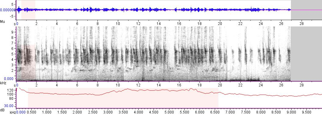 Sonogram of recording #AV 12821