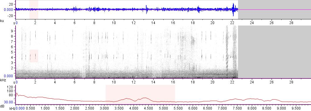 Sonogram of recording #AV 12829