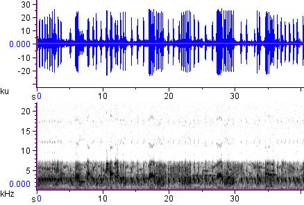 Sonogram of recording #AV 12846