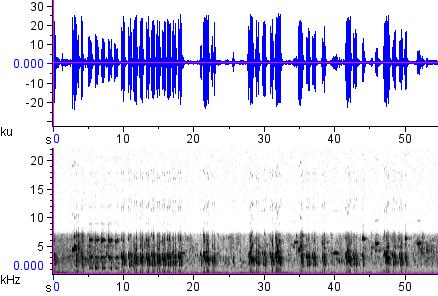Sonogram of recording #AV 12850