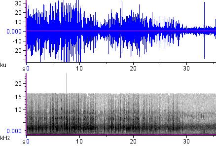 Sonogram of recording #AV 12853