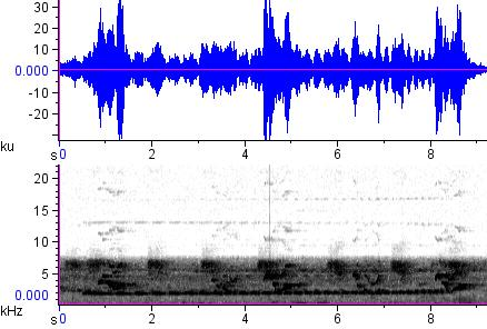 Sonogram of recording #AV 12854
