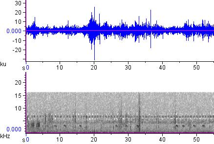Sonogram of recording #AV 12868