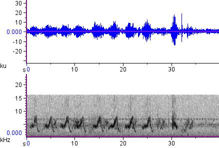 Sonogram of recording #AV 12869
