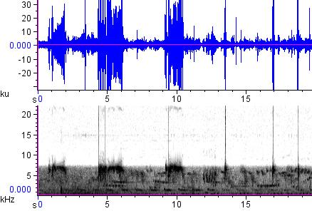 Sonogram of recording #AV 12870