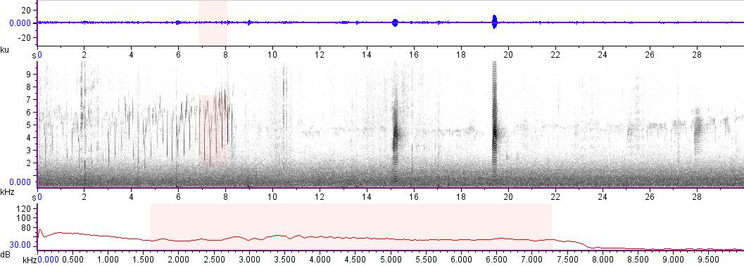 Sonogram of recording #AV 12875