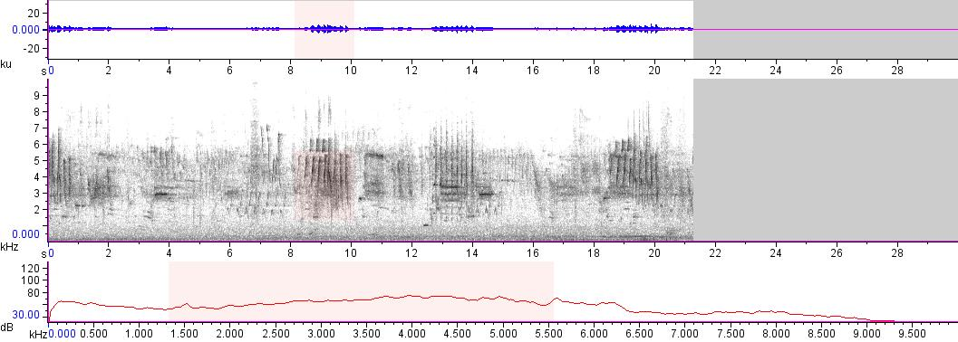 Sonogram of recording #AV 12919