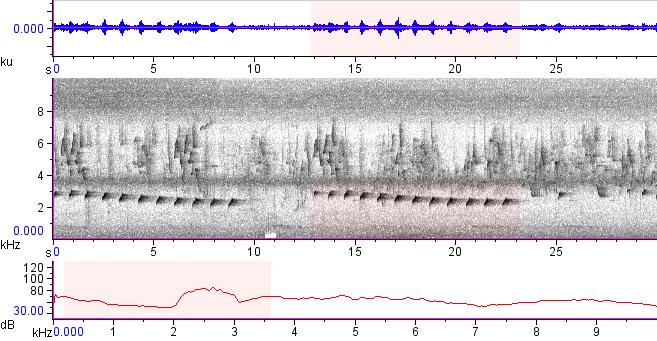 Sonogram of recording #AV 12978