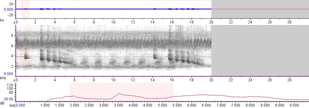Sonogram of recording #AV 13001
