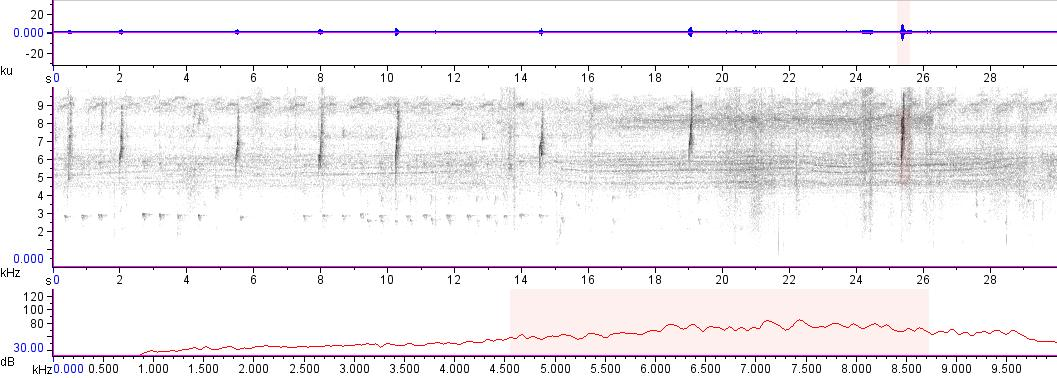 Sonogram of recording #AV 13020